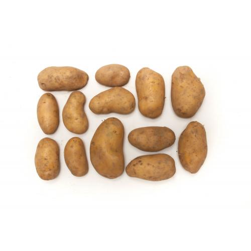 Suhrentaler Bio-Kartoffeln festk. ungewaschen